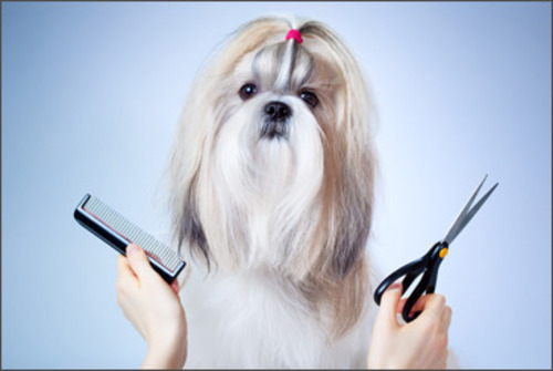 Pet grooming fort lauderdale