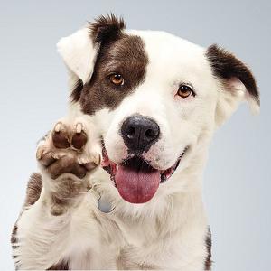 donate to dog shelter